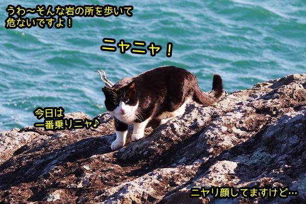 おマヌケ 白黒猫
