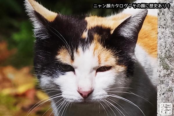 ニャン顔NO167 三毛猫さん