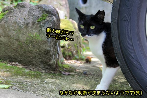 白黒猫 あいさつ