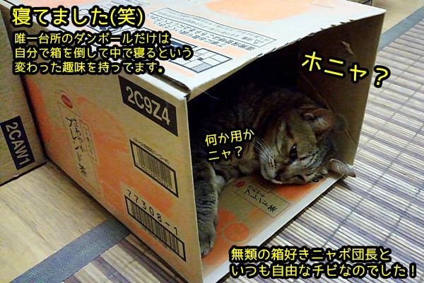 箱好きニャポ