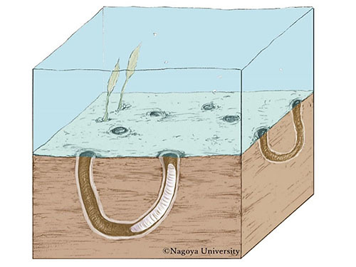 世界最古の巣穴化石