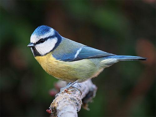 ヴォイニッチの科学書 第714回 鳥の離婚率