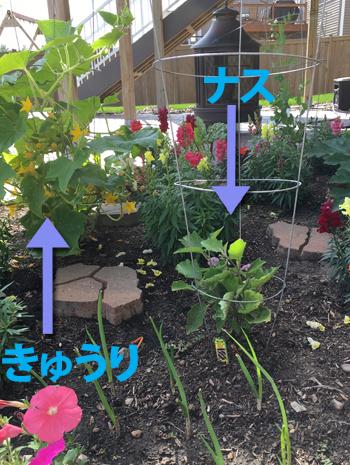 garden062718.jpg
