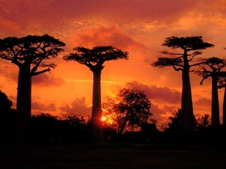 Baobab78678.jpg