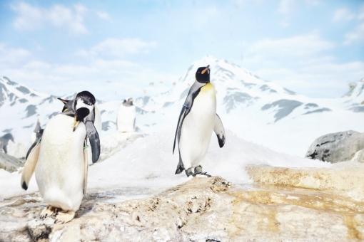 Penguin45378.jpg