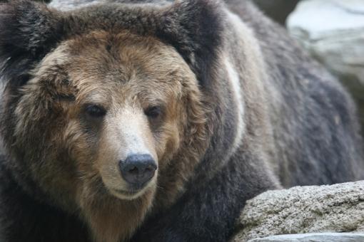 bear3876376.jpg