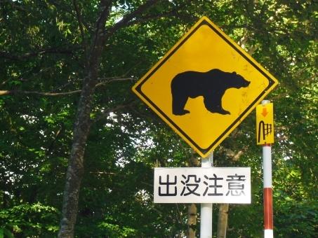 bear61865.jpg
