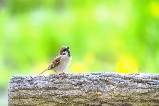 bird785387.jpg