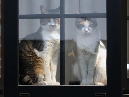 cat123458.jpg