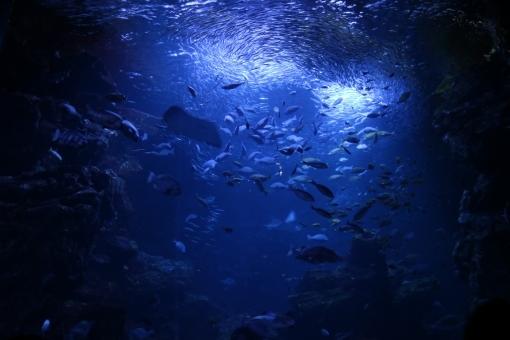 deep_sea876387.jpg