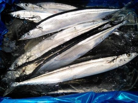 fish_sanma876543976.jpg