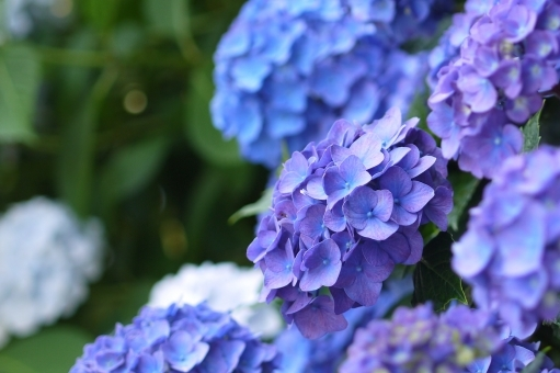flower63876.jpg