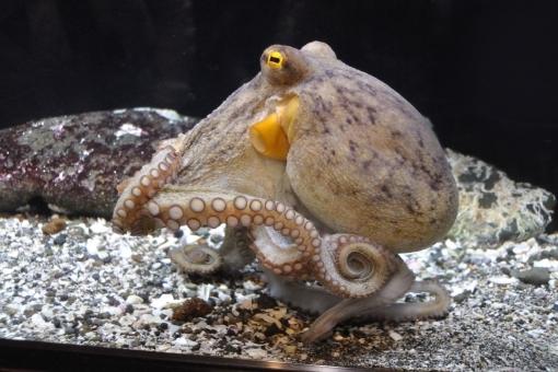 octopus86786.jpg