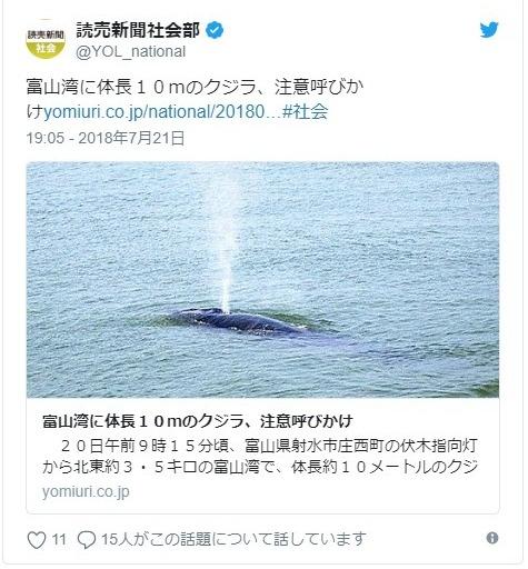 【日本海】富山湾に生態不明で希少な「ツノシマクジラ」が出現…国内での目撃例はたったの4件