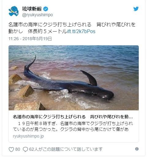 沖縄の海岸に「コビレゴンドウクジラ」が打ち上げられる!