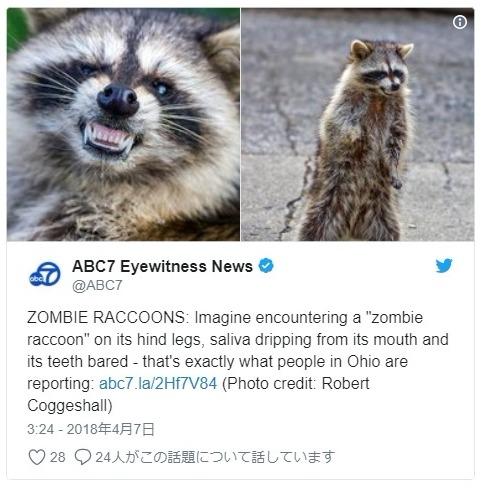 【アメリカ】アライグマの「ゾンビ」が現れ、住民らは騒然…異常行動が相次ぐ