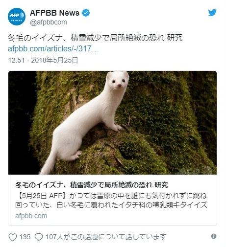 【雪原】イタチのキタイイズナが地球温暖化により、捕食標的にされるようになり絶滅のおそれ
