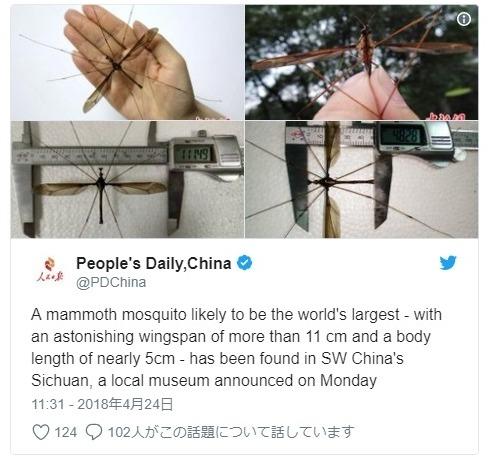 【巨大生物】中国で体長「11cm」を超える「蚊」が発見される!