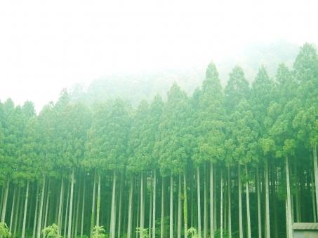 tree78678678.jpg