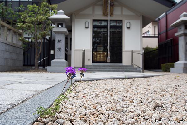 平和ヶ丘神社拝殿前