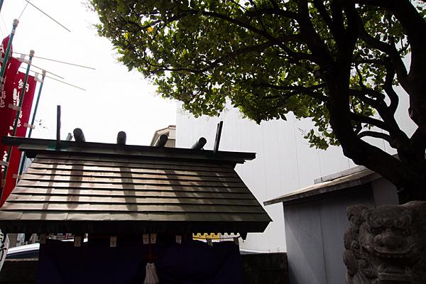 新道天王社本社屋根と木