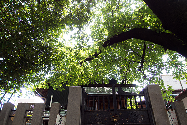 錦神社木漏れ日と社