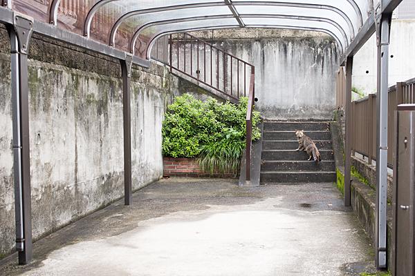 民家の階段の猫