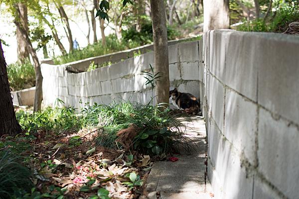 神社横の猫