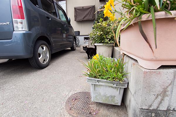 民家前の猫