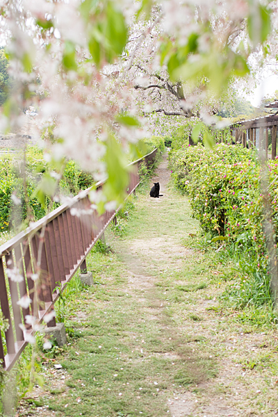 名城公園の猫