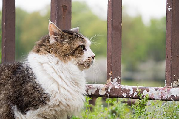 名城公園にいる猫
