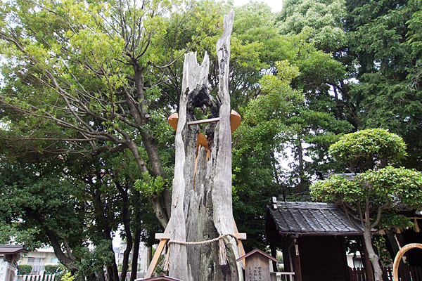 西八龍社焼けた杉の木