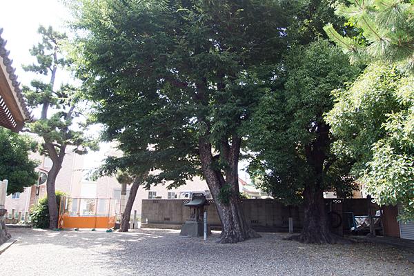 土古町八劔社保存樹の楠と境内社