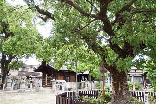 枇杷島八幡社保存樹