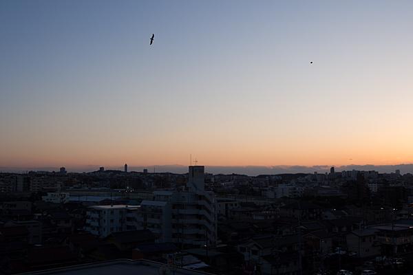 鳥のいる風景10