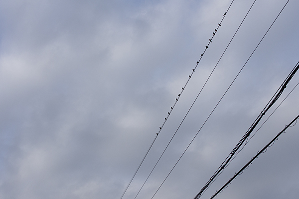 鳥のいる風景4