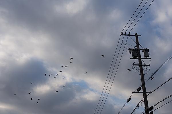 鳥のいる風景5