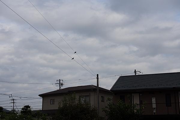 鳥のいる風景8