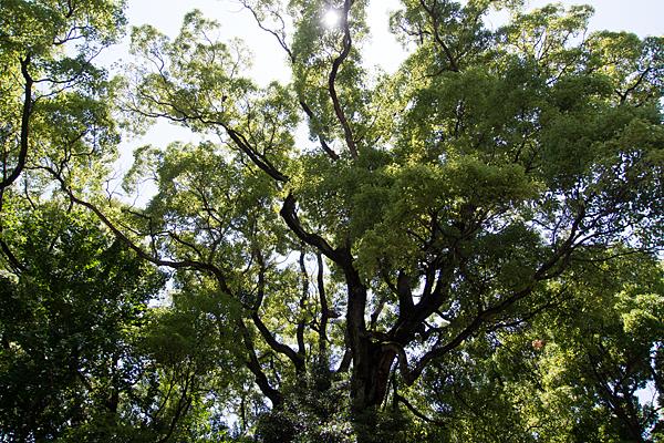 築地神社木々