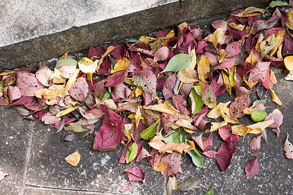 犬山寂光院色とりどりの落ち葉