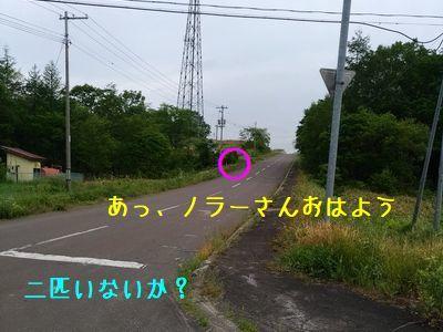 P_20180701_052809_vHDR_Auto.jpg