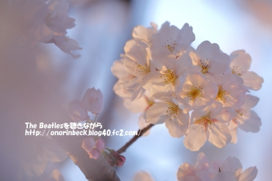 IMG_2018_03_25_9999_412.jpg