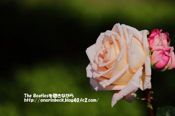 IMG_2018_05_12_9999_184.jpg