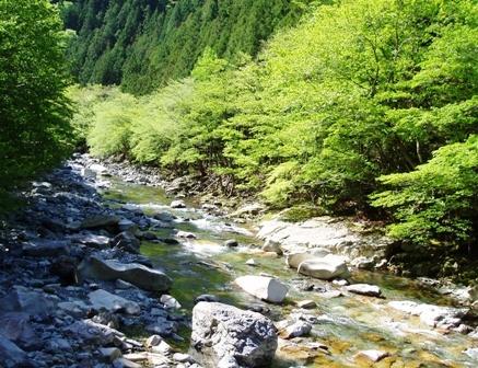 新緑の川迫川ブログ用1