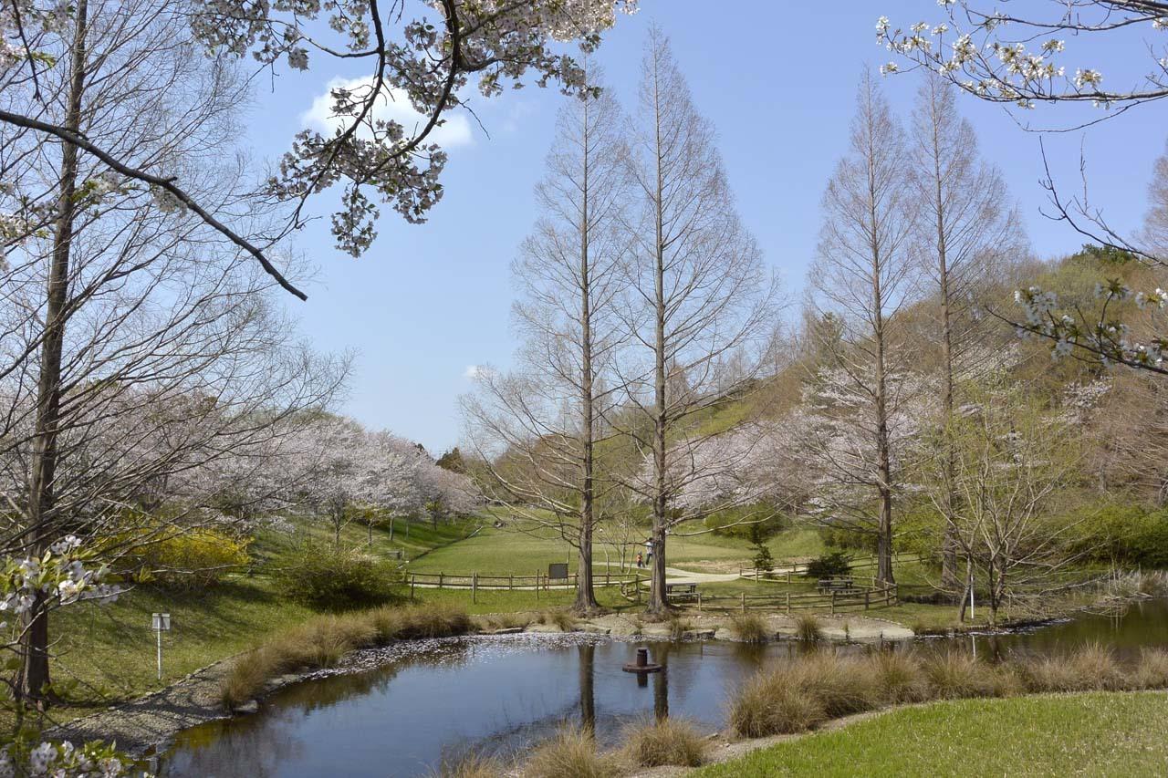 _DSC9873近所の桜