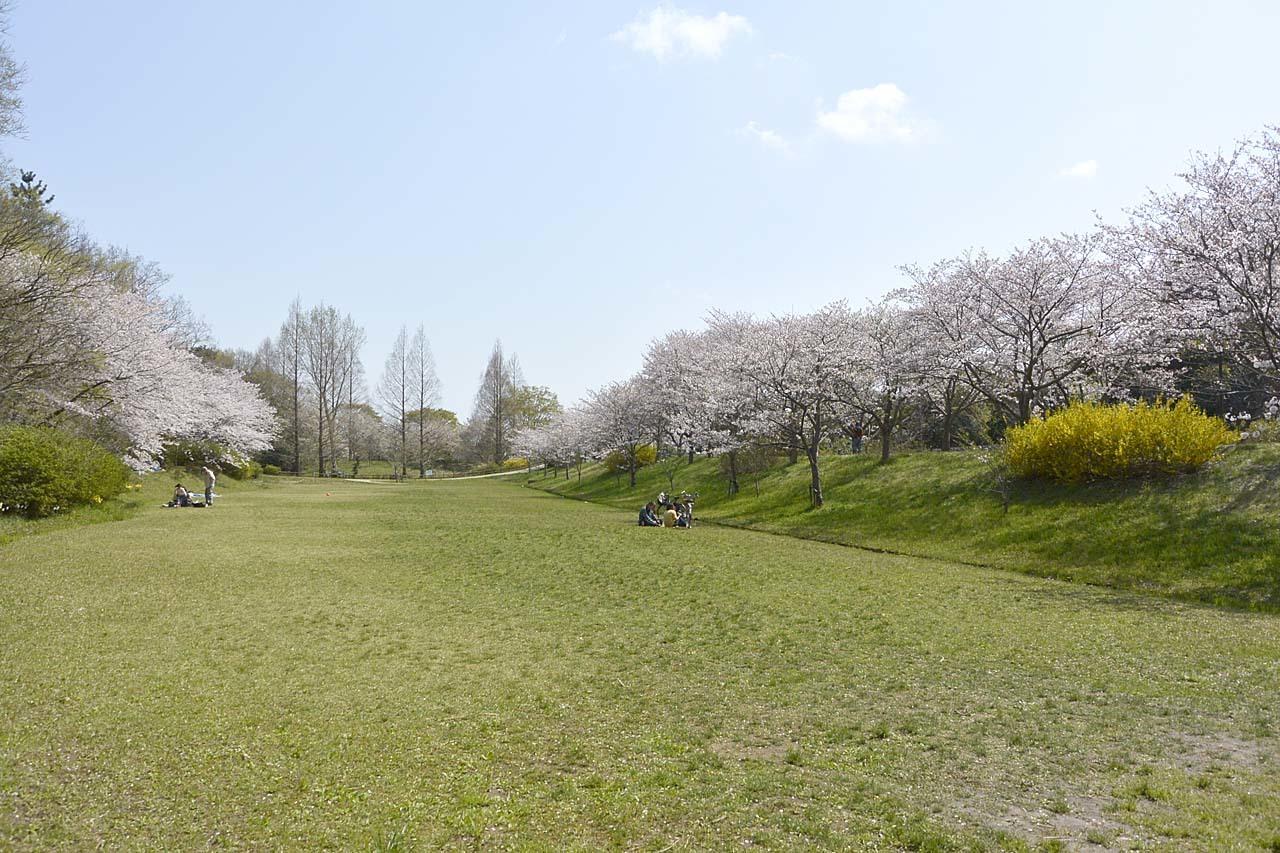 _DSC9892近所の桜