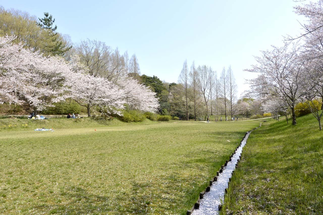 _DSC9895近所の桜