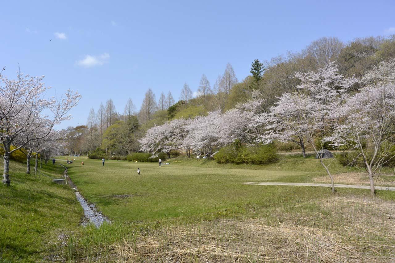 _DSC9916近所の桜