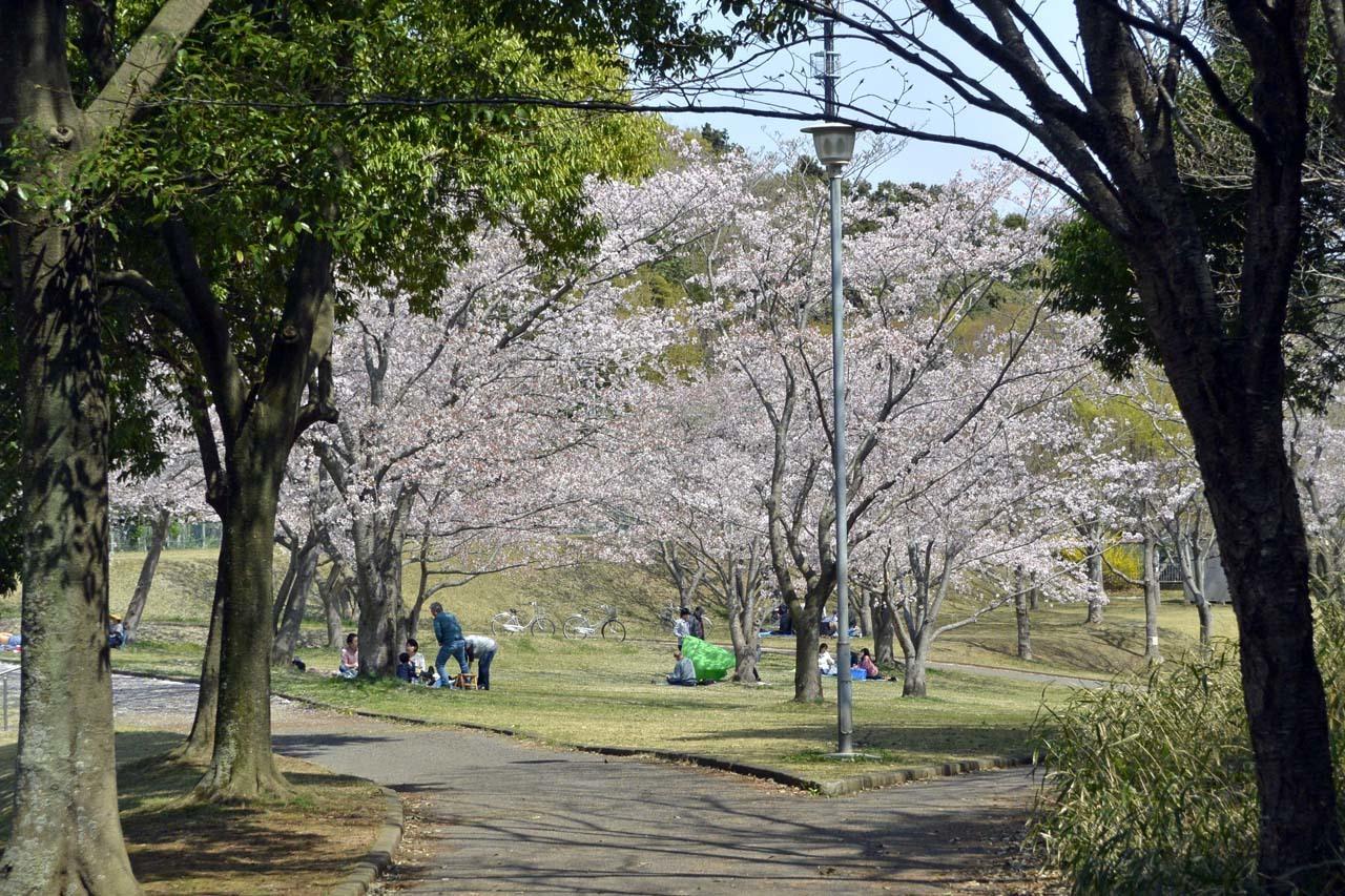 _DSC9866近所の桜
