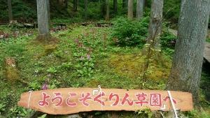 くりん草園